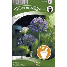 Allium, Quattro F1