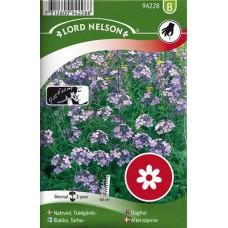 Trädgårdsnattviol, violett