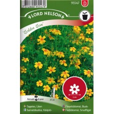 Tagetes, liten,  Golden Gem