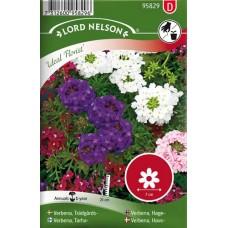 Trädgårdsverbena, Ideal Florist